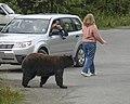 Bear Photo Phone 17.jpg