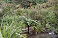Beautiful Wild Plants at Rainbow Spring Rotorua NZ - panoramio.jpg