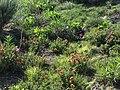 Beautiful assorted flowers on the Cimarron National Grassland (b3ed19399ffc4279b49c1f3c308ac375).JPG