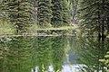 Beaver ponds Kananaskis Alberta Canada (26589263973).jpg