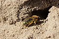 Bee (41545053671).jpg