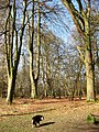Beech Trees in Winter, Moneybury Hill - geograph.org.uk - 1185138.jpg