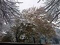 Beijing 20091101 snow.jpg
