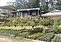 Berastagi Flower Market 01.jpg