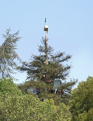 University of California, Berkeley oak grove controversy - The tree-sitters' camp as of July 8, 2008.