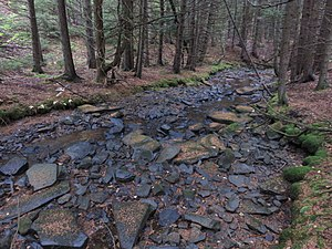 Big Run (North Fork South Branch Potomac River) - Big Run, just after it leaves the marshland and enters the forest, below the beaver dam at river mile 12.4. Monongahela National Forest, West Virginia, 8 October 2017