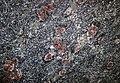 Big garnet amphibolite (Precambrian; Warrensburg, Adirondack Mountains, New York State, USA) 34.jpg