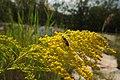 Biotopo inghiaie ape al lavoro2.jpg