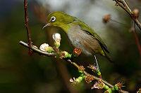 Bird-04