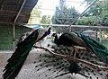 Birds-Garden-animals.jpg