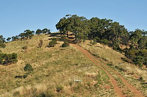 Black Hill Conservation Park - Access track in Black Hill Conservation Park