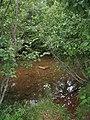 Bloomfield Provincial Park IMG 8205 (1848200535).jpg