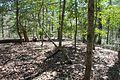 Boones Mounds, Arkansas DSC 0897 (8565789432).jpg