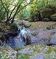 Bosque - Bertamirans - Rio Sar - 038.jpg