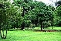 Botanic garden limbe68.jpg