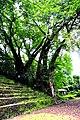 Botanic garden limbe94.jpg