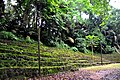 Botanic garden limbe96.jpg
