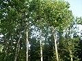 Botanical garden in Zugdidi(09).jpg