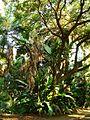 Botanique - Le Jardin d'essai d'El Hamma - Alger.JPG
