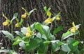 Bowman's Hill Wildflower Preserve - IMG 8293.JPG