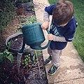 Boy in blue t-shirt watering plants.jpg