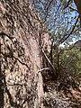 Boynton Canyon Trail, Sedona, Arizona - panoramio (74).jpg