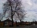 Bramcote Lane, Bramcote - geograph.org.uk - 1775848.jpg