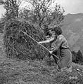 Breme grabljivka potem še ograbljuje 1959.jpg