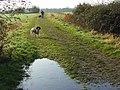 Bridleway, Ruscombe - geograph.org.uk - 648222.jpg