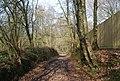 Bridleway through Green Wood (3) - geograph.org.uk - 1252947.jpg