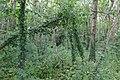 Bromborough Moat from Pool Lane 3.jpg