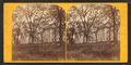 Brown University, Providence, R.I, from Robert N. Dennis collection of stereoscopic views.png