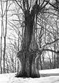 Bundesarchiv Bild 183-29290-0007, Bad Liebenstein, Hohllinde.jpg
