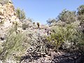 Butcher Jones Trail - Mt. Pinter Loop Trail, Saguaro Lake - panoramio (142).jpg