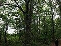 CP 13 - panoramio.jpg