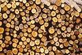 CSIRO ScienceImage 1725 Wood pile.jpg