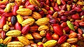 Cacao San Pedro Grand Bereby La Flotte.jpg