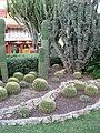 Cactuses - panoramio.jpg