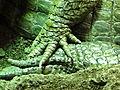 Caiman crocodilus - Vivarium de Meyrin 08.JPG
