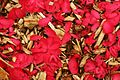 Camellia Petals On Woodchips RHS Wisley Surrey UK.jpg