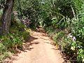 Camino hacia arriba - panoramio.jpg