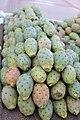Caryophyllales - Opuntia ficus-indica 4.jpg