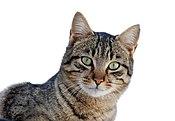Cat March 2010-1.jpg