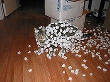 Cat and styrofoam – electrostatic charge (235112299).jpg