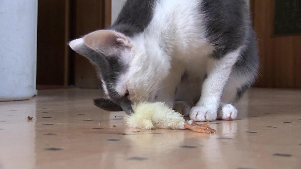 can you teach a cat tricks