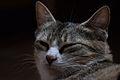 Cat face 05.jpg
