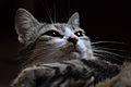 Cat face 07.jpg
