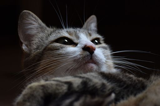 Cat face 07