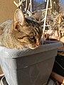 Cat in Plant Pot.jpg