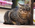 Cat on Hauts-de-Cagnes.jpg